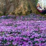 Hi @Exeter_Hour! Spring has definitely sprung! Plenty going on across the estate: http://t.co/hkqz0ed90L #ExeterHour http://t.co/Wpdo5r4Hf2