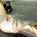 An Italian fisherman reeled in an 8-foot-9-inch catfish that weighed 280 pounds! » http://t.co/7Q5xeXyFct http://t.co/KnzbipViHN