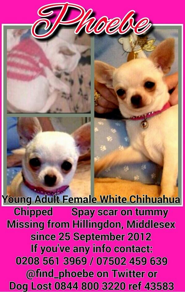 *EVERYDAY IS PHOEBE AWARENESS DAY* Phoebe has been missing since 25th September 2012 VERY LARGE REWARD. @find_phoebe http://t.co/xS4VgNyqVF