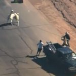 LLAMA UPDATE: 2nd llama corralled after lengthy pursuit http://t.co/XpVj857Orr http://t.co/cP5jy67X7j