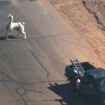 New Net Neutrality rules means we can all watch video of llamas on the loose at the same speed. Thank you FCC. http://t.co/vDJFUD7of0