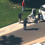 Your Llama LLivestream awaits: The quick-footed llamas dashed in and out of Arizona traffic http://t.co/dSgroIy9ya http://t.co/Z823nbtBTA