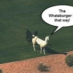 """@Whataburger: The struggle is real #LlamaDrama http://t.co/MNtlY2OLfo"" @millerboyle77 @abbilynngrace12 @grantolson622 this is our youth😂"
