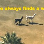 9 Invaluable Life Lessons We All Learned From The Llama Chase http://t.co/1XSy53cCvp http://t.co/POn5f4s7Nz