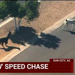 Llamas on the loose preempt #CPAC coverage: http://t.co/eHCGBOeN9m http://t.co/LEG8ccfnaX