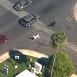 Llamas in Phoenix captured after thrilling chase by police, camera crews and residents http://t.co/a9zK8K3eRD #SPnews http://t.co/ynQM4fff0c