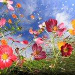 #TopShot: Flower Power http://t.co/ivWjMkttuU http://t.co/EkchmopZuV #photos #photography