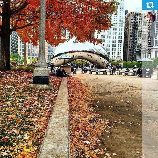 Beautiful shot of Fall in #Chicago! Photo by @anabellac http://t.co/QdymSmweza http://t.co/FiIQy4q699