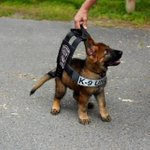 Boston police K-9 tries on his vest that he will grow into: http://t.co/Ei1h09cmth http://t.co/RIByDVGMf4