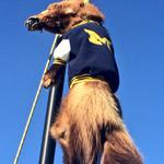 """RT @KevinGehlWLNS: #MSU tailgate sign: """"The only good wolverine..."""" #Spartans #Michigan http://t.co/KQ6sPG5QN7"""