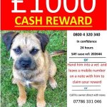 RT @Hetty_Bear: our furry pal Toby was stolen 2 wks ago in Woking, pls check poster and bring him home #findtoby #XFactorMoviesWeek http://t.co/RnQDxkP0vU
