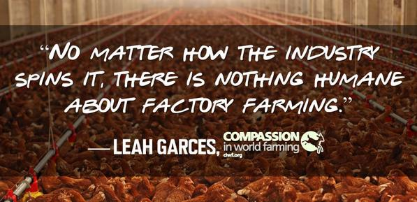 .@ciwf nails it in this new @foodsafetynews article: http://t.co/sIu0BYBZ22 #factoryfarming http://t.co/udO3AFj1iM