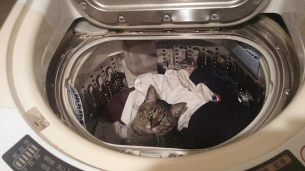 めったに湧かない洗濯欲がが、いともあっさり消滅した瞬間。 http://t.co/dkNiEoVVYO
