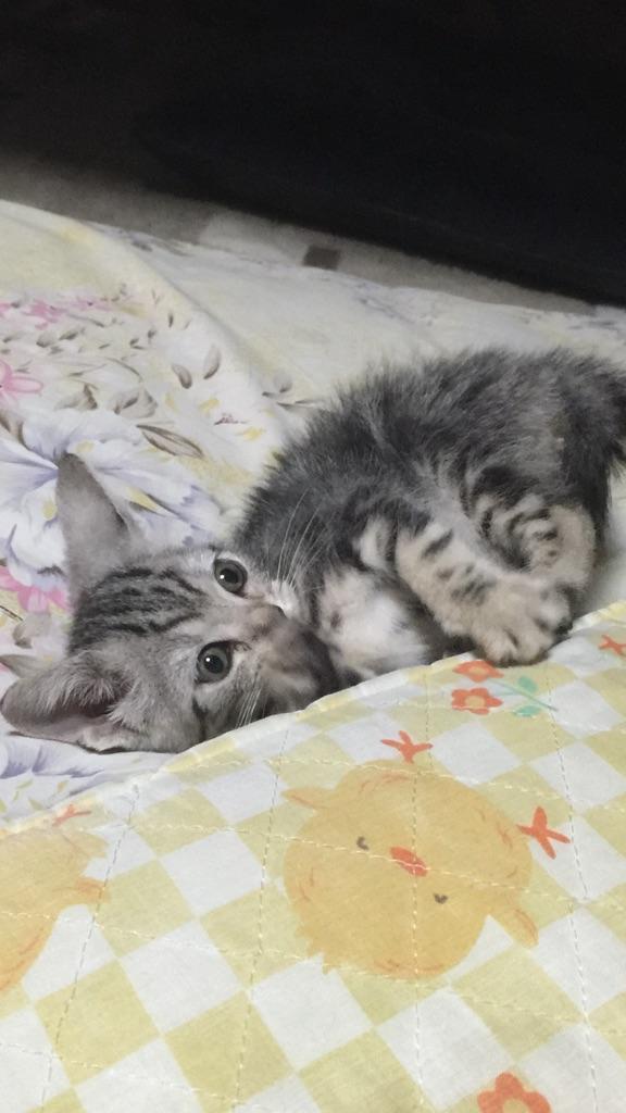 ネコお迎えですっ♪ http://t.co/kW7FJuEobN