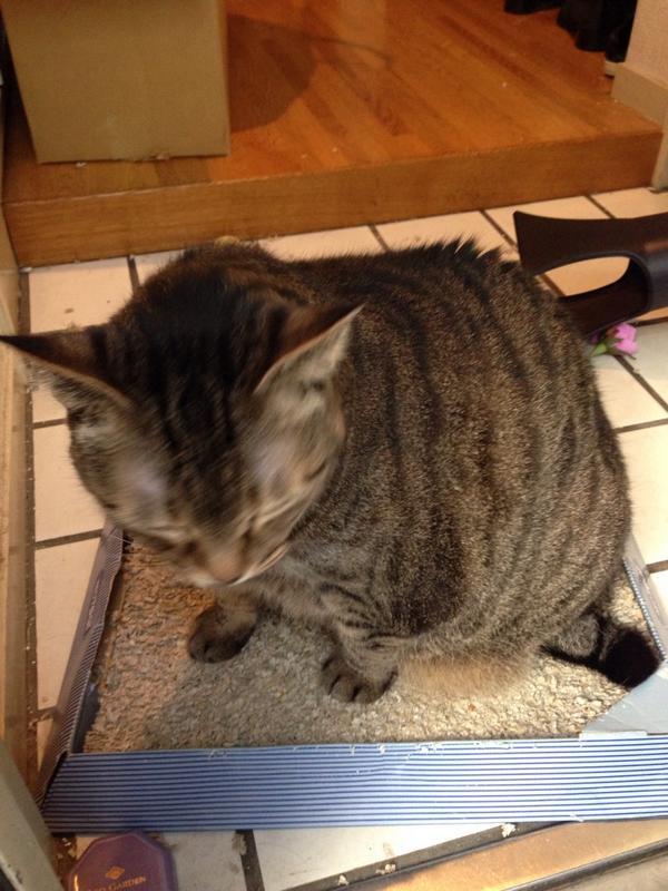 中川翔子さん「飼い猫に愛されすぎてつらい。つらいわ」