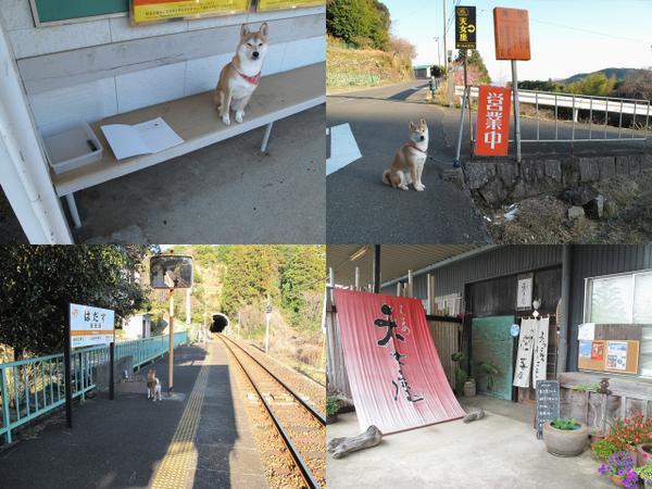 【巡礼犬エピソード0】凪あす。この聖地巡礼の後、2度目に波田須に来た時にひよこ軍さんに初めてお会いしました。「聖地巡礼犬