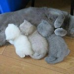 The printer is running out of ink. http://t.co/Pnn2DlrBED