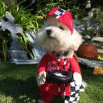 RT @FreddiePrints: #Halloween costume #4 of 4: Freddie Andretti! Vote fur your fav ???? #dogslife #HalloweenCostumes #itsadogslife #pets http://t.co/fzedrVYyTE