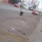 #hastacuando Alcalde #iquique viaja y viaja y la ciudad cuando? http://t.co/fQ4w0mIJB8