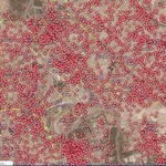 Good grief. Nowhere is safe. Here is a map of Baghdad showing every car explosion since 2003. Via @BrilliantMaps http://t.co/B1ZTJ1wOzS