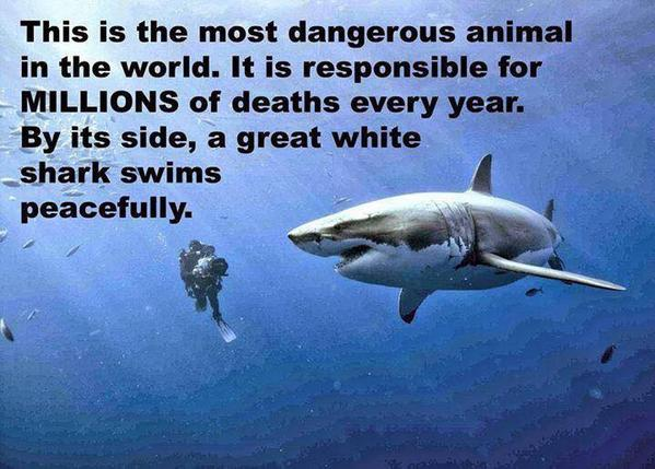 The most dangerous animal in the world: http://t.co/wiWlYnSPIE