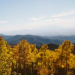 The #Aspens of #NewMexico are breathtaking this time of year! http://t.co/hV4gSfvYuQ