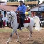 GOVERNO AÉCIO: gastos com cavalos são incluídos como despesas do SUS. #QueroDilmaTreze http://t.co/LY8hlC5n7x