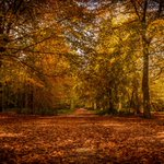 RT @jcwoody: Autumn in the Lickey Hills #birmingham #worcester #autumn #somecities @LickeyHills http://t.co/SFquC1X0cz