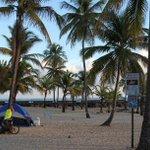 RT @LaPerlaPR: Levantan campamento contra tala de palmas en La Ventana al Mar | http://t.co/9ofBgNJCes (vía @primerahora) http://t.co/BxTVu5ptBH