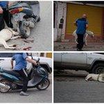 """@guardiacivil @policia las imágenes sugieren que """"sacó a pasear"""" al perro atado a la moto ¿se puede investigar? https://t.co/RNPHbfwidi"""