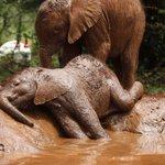 Elefantinho órfão relaxa em banho de lama no Quênia; veja as fotos do dia http://t.co/3xB988FvRc #G1 http://t.co/TJph4pNurd