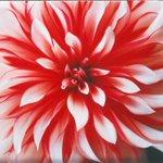 写真家・蜷川実花の写真展が六本木で開催 - 未発表作品を展示 http://t.co/1xDRr7cugP http://t.co/SDYGKis0l9