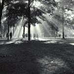 RT @umheritage: Gorgeous #UMich Diag has its roots in @umichLSA profs rogue decision to plant trees. http://t.co/g10dRaimJ4 http://t.co/UfwXGfX8L7