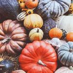 RT @FreeCountryLTD: Autumn means strolling through the patch to find that perfect pumpkin. What are your seasonal traditions? http://t.co/84iIuO85Uh