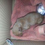 Este perrito esta abandonado y urge una casita para el @JaenSquare @CondondeJaen @elcreata @QuejasJaen @NaruNdc http://t.co/mxS1Al6zsd