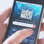 Worlds greenest #apps? @SeafoodWatch ranks No. 5! http://t.co/LFN1ihKxFm @WSP_UK via @GreenBiz http://t.co/w2srhNdVkR
