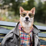 "RT @FashionFilmsNYC: ""Menswear Dog"" Owners Make $15K a Month Off Their Shiba Inu http://t.co/AT0m4RbGj8 #Fashion http://t.co/lLxK1Lavjm"