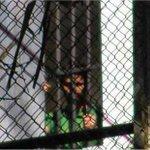 RT @elmundomovil: Alto Comisionado DDHH pide liberación inmediata de @LeopoldoLopez http://t.co/dktSgHhJPh http://t.co/t7F5tF7krx