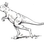 RT @carolynryan: Frightening. Scientists discover 500- pound kangaroo that was too heavy to hop, just stomped. http://t.co/0hkSjZBvBD http://t.co/wfcialN78x