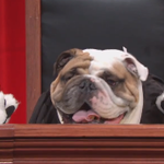 John Oliver created must-see television last night with Supreme Court audio & dogs: http://t.co/OXLMrB9RpR http://t.co/8KfacyS8DJ