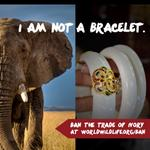 One step at a time. Help save these beautiful animals. http://t.co/dbq7mxCcBX