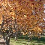 RT @maramonsk: @JC_Garden Found this tree while walking around Wascana Park today. http://t.co/0vzkU0pH0a