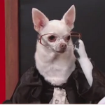 RT @TheFix: Think the Supreme Court is boring? What about puppies re-enacting Supreme Court sessions? http://t.co/6iIzDdvUnM http://t.co/Bxx4g3bgR2