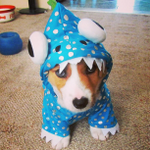 RT @BuzzFeed: 22 times corgis proved they are the champions of Halloween http://t.co/1XmooR1fc1 http://t.co/uqE3GVBlyi