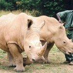 【絶滅危機】キタシロサイの死体発見 残りは世界で6頭に http://t.co/NtYGmSVmYa 数十年に及ぶ密猟の横行で数が激減している。ケニアの動物保護当局は「キタシロサイの子供が生まれるよう、できる限り努める」と述べた。 http://t.co/XJuwcJkwro