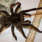 NOPE RT @KETV: Scientist stumbles upon puppy-sized spider http://t.co/m8DlfQJUfT http://t.co/L8ZT01Gvly