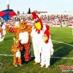 RT @enunabaldosa: ❤ ❤ ❤ El Gallo y el Gatito ❤ ❤ ❤ #AmigosSiempre http://t.co/0lTdkQCKDe
