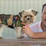 RT @In_My_Community: The suburbs are so unsafe for dogs theyre now wearing kevlar. #Perthnews http://t.co/VgGGoQmEUP http://t.co/DLgQXrxqpX