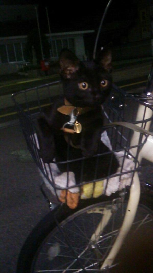 魔女の宅急便   #猫画像