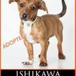 Puppy Ishikawa was adopted just in time for Game 1 of the #WorldSeries! Go Giants! @SFGiants @FlemmingDave http://t.co/IuSoZ5ZUtR